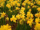 Frühlingsgruß an trüben Tagen