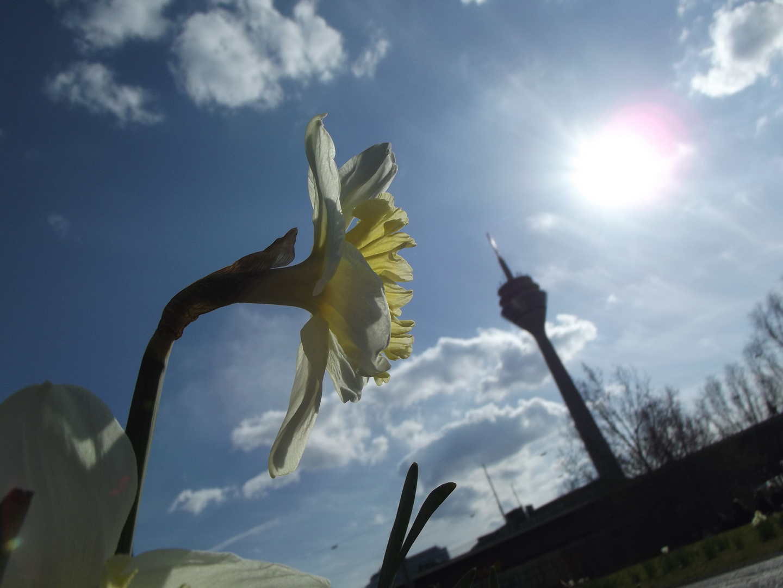 Frühlingsgruß aus Düsseldorf