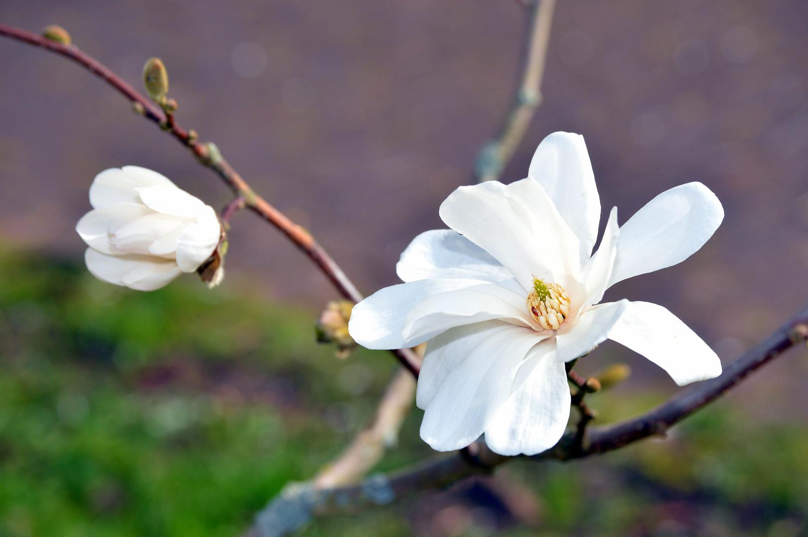 Frühlingsgruß zum 1. April