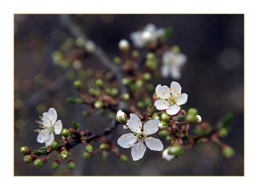 Frühlingsgruß zum Ostersonntag