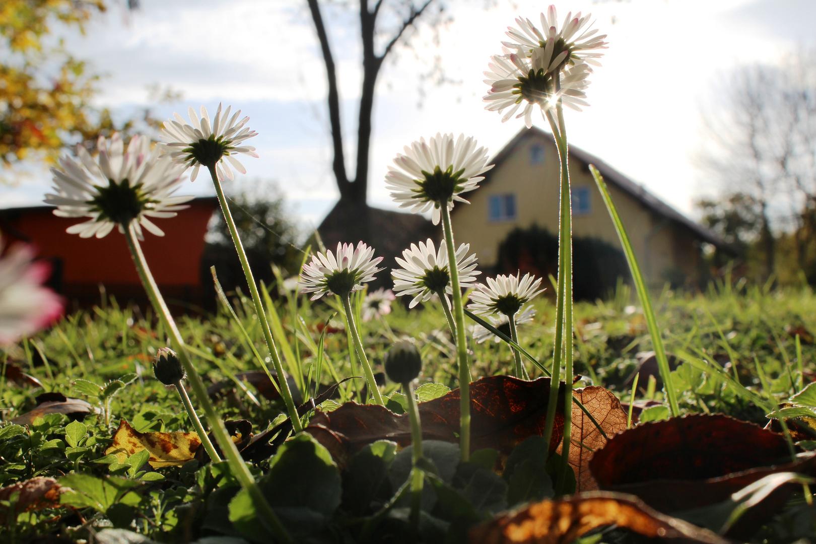Frühlingshafter Herbsttag