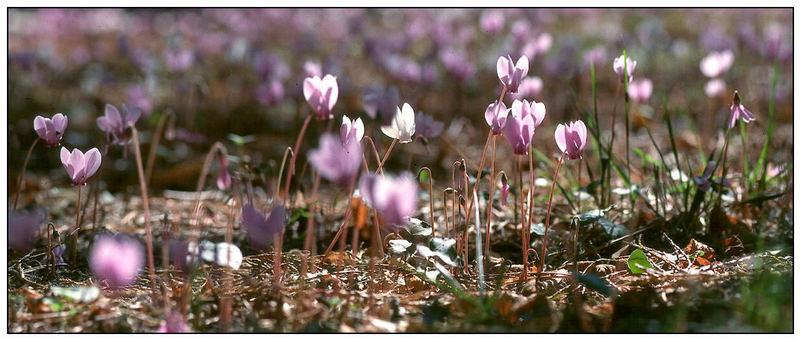 Frühlingshafter Spätsommer