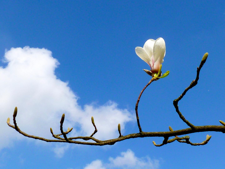Frühlingshaiku