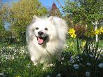 Frühlingshund