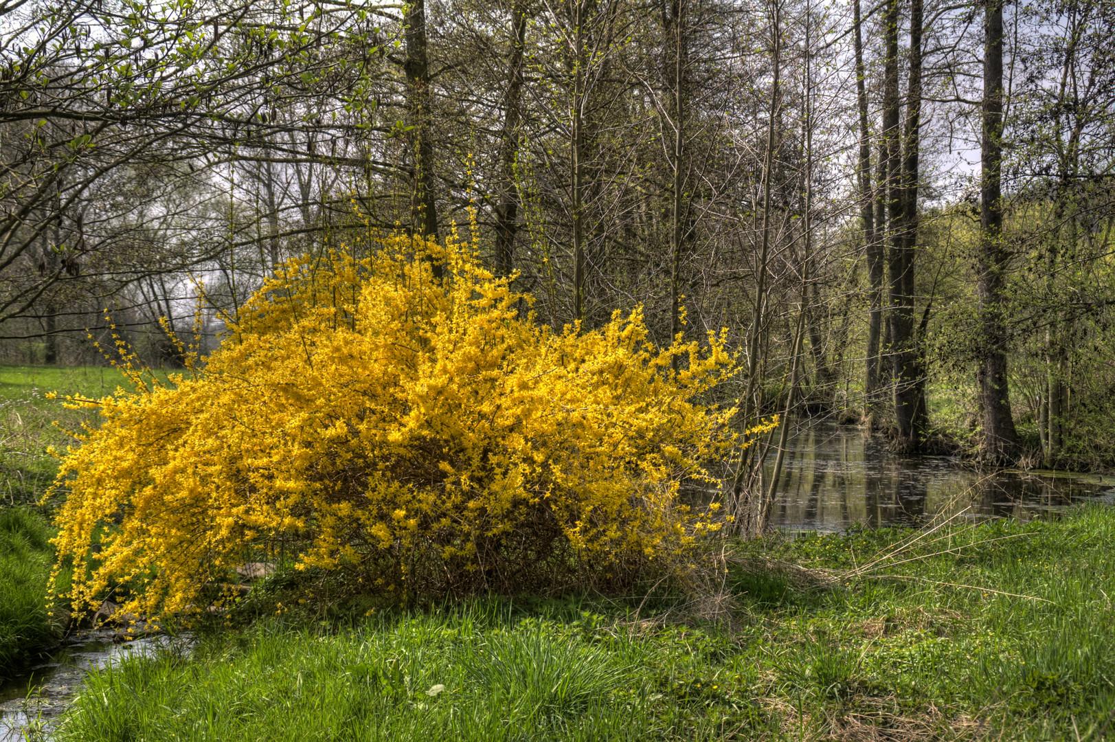 Frühlingsidyll