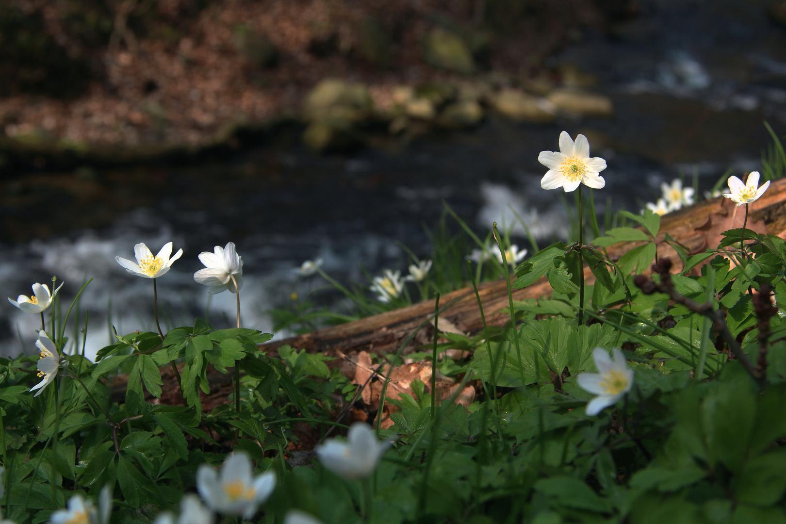 Frühlingsidylle