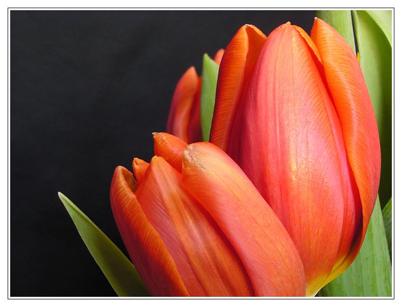 Frühlingsimpression 1