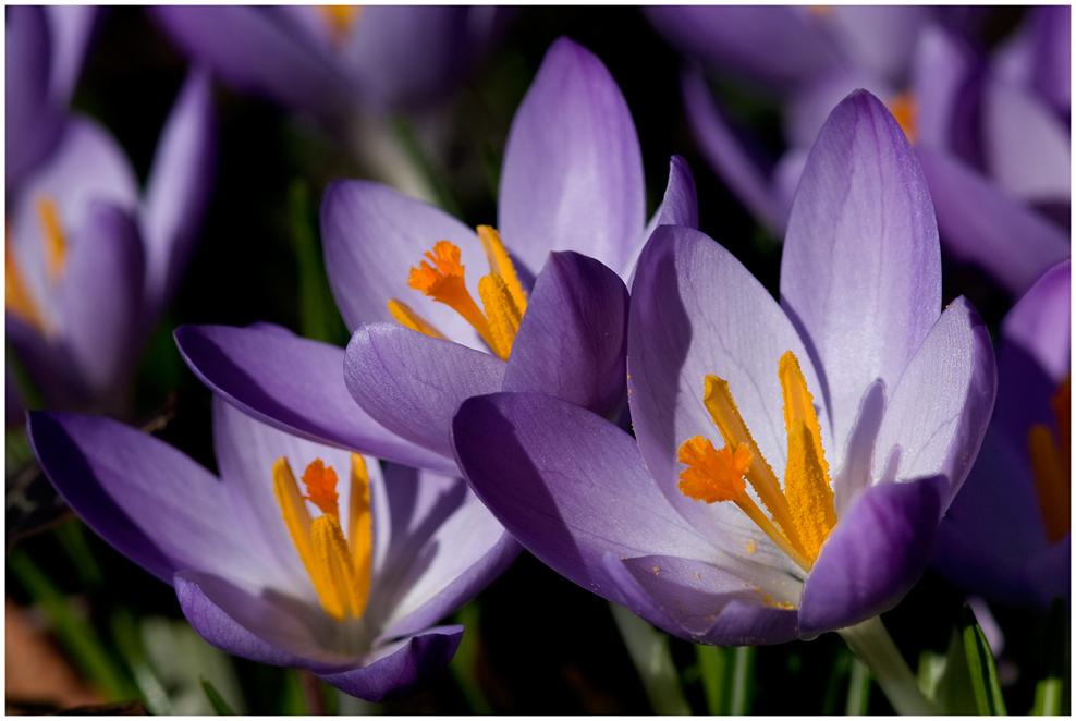 Frühlingsimpression...