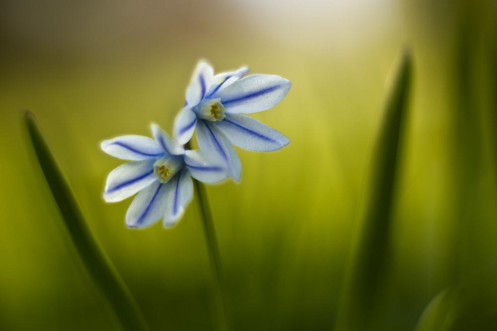 Frühlingsimpression_10