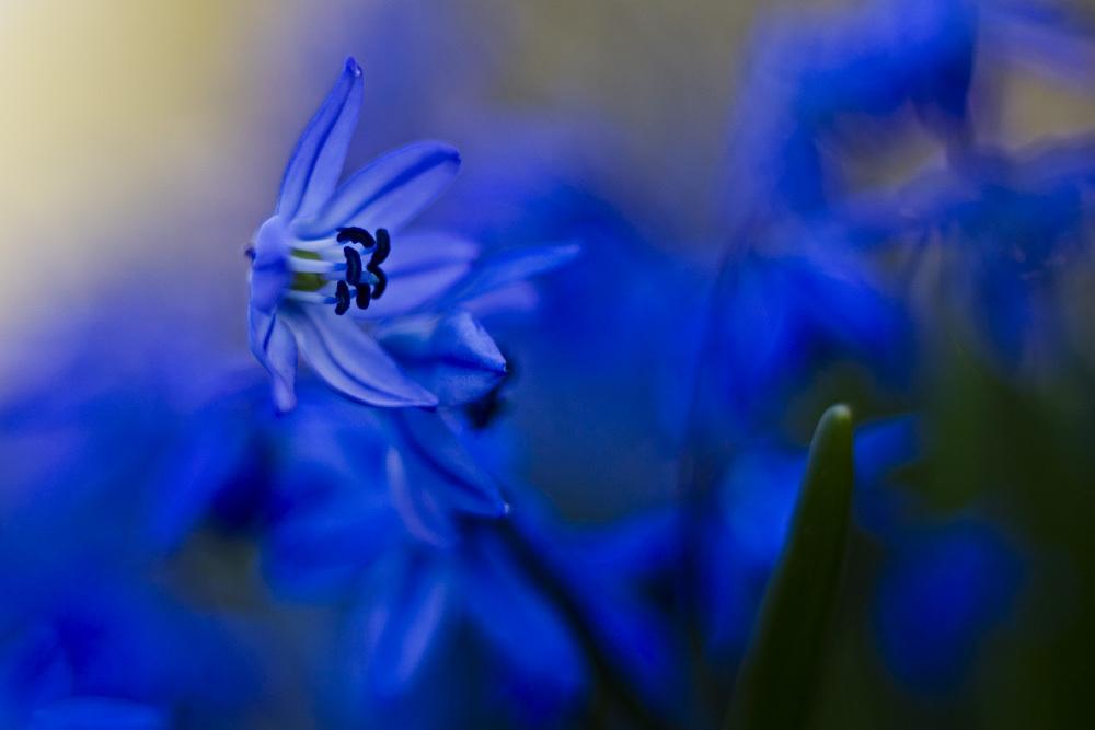 Frühlingsimpression_12