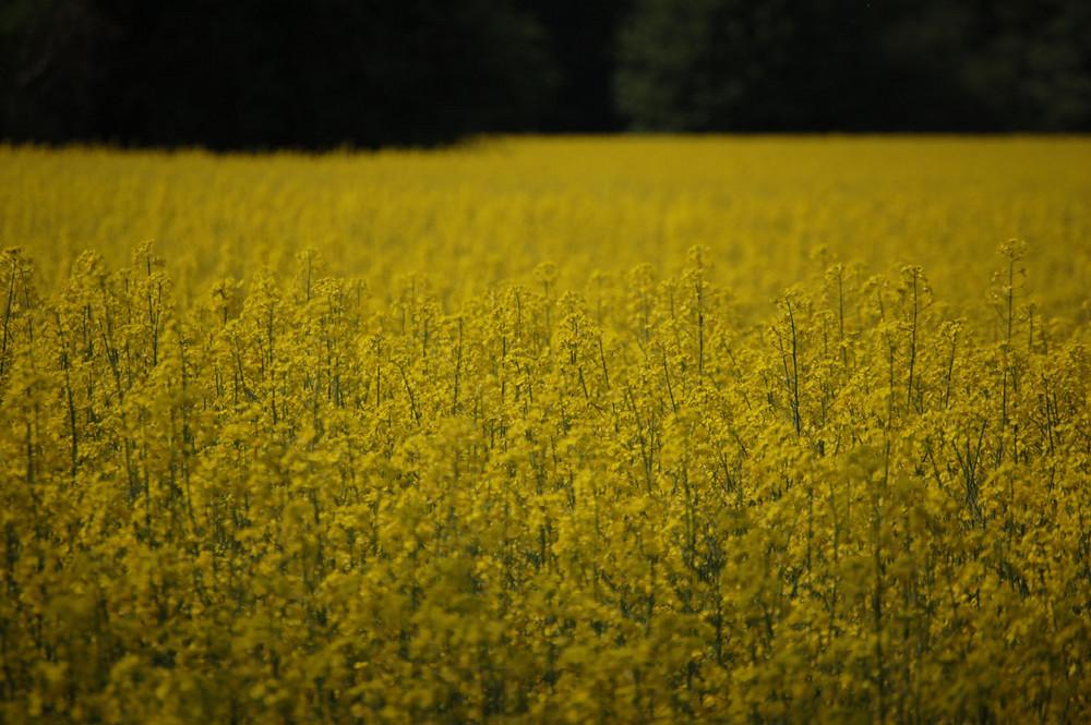 Frühlingsimpressionen '09