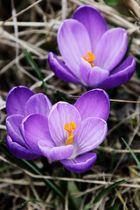 Frühlingsimpressionen 1