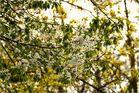 Frühlingsimpressionen (1)