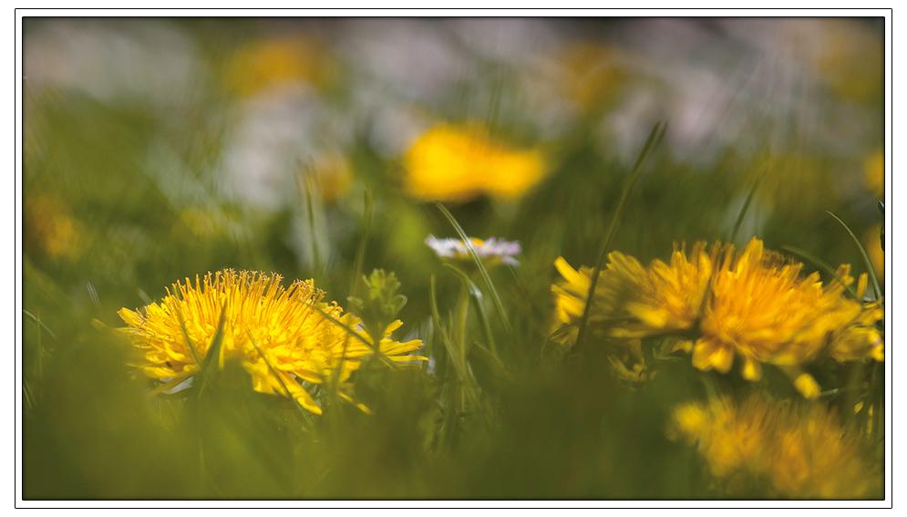 Frühlingsimpressionen 2