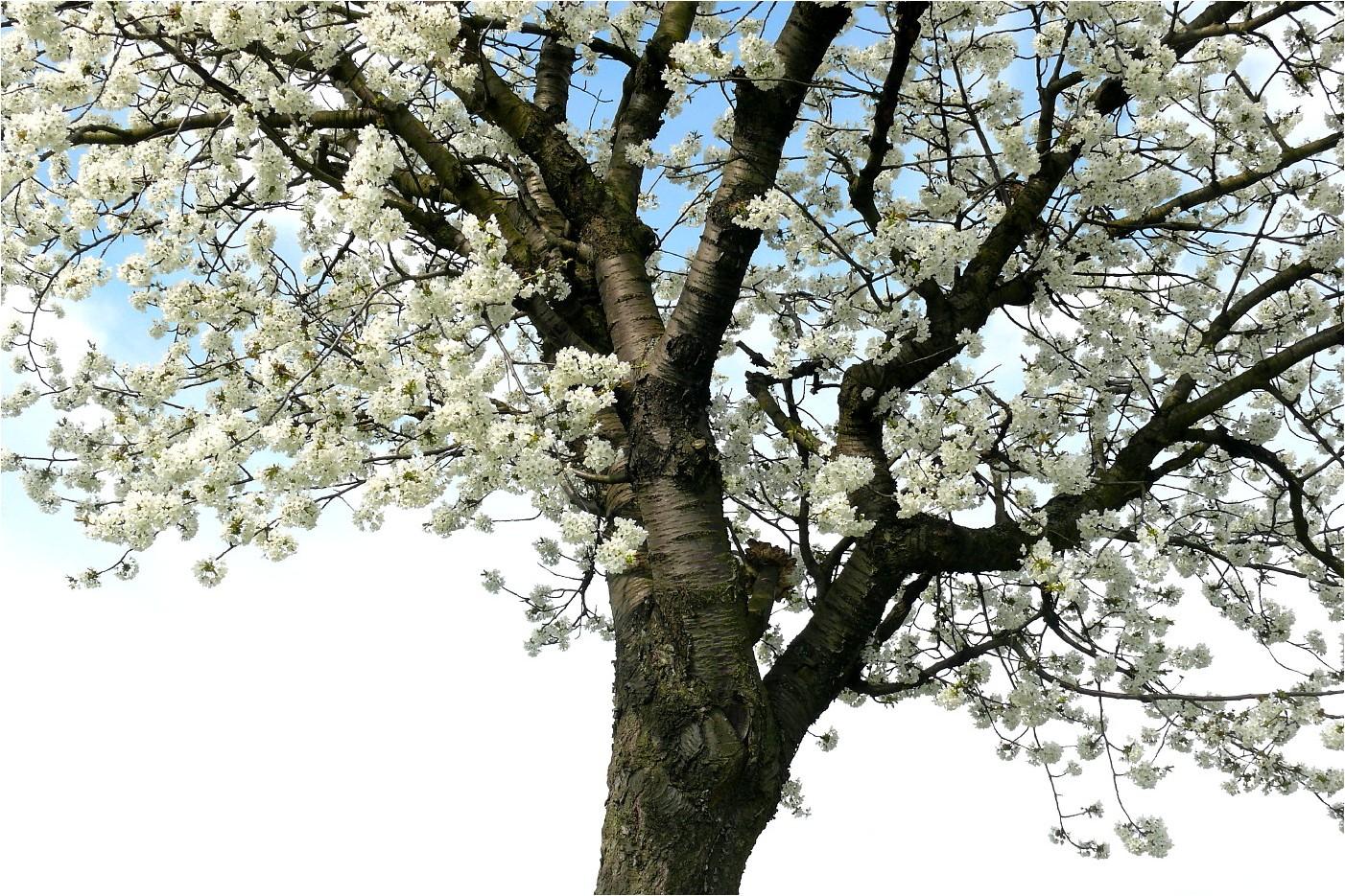 Frühlingsimpressionen (2)