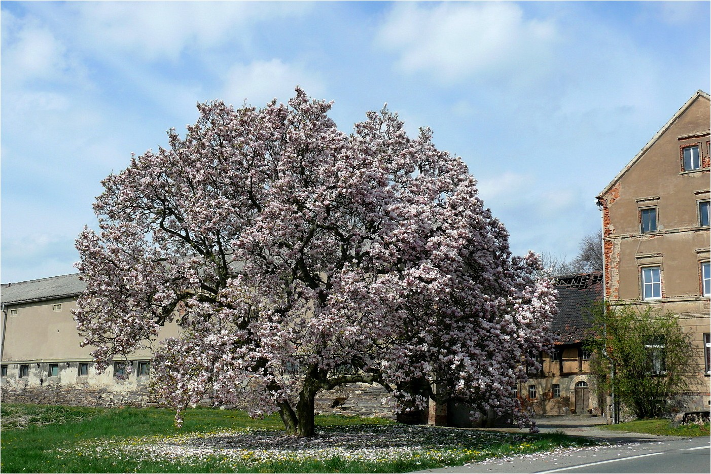 Frühlingsimpressionen (3)