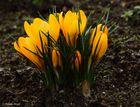 Frühlingsimpressionen (4)
