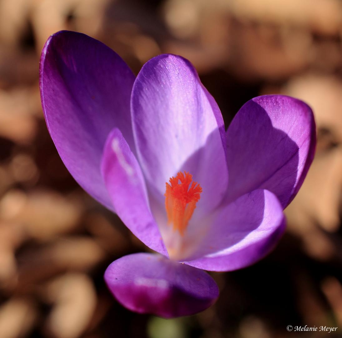 Frühlingsimpressionen (5)