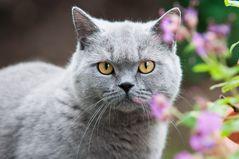 Frühlingskatze