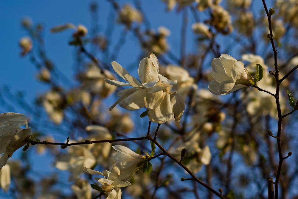 Frühlingskleid