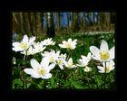 Frühlingskraut