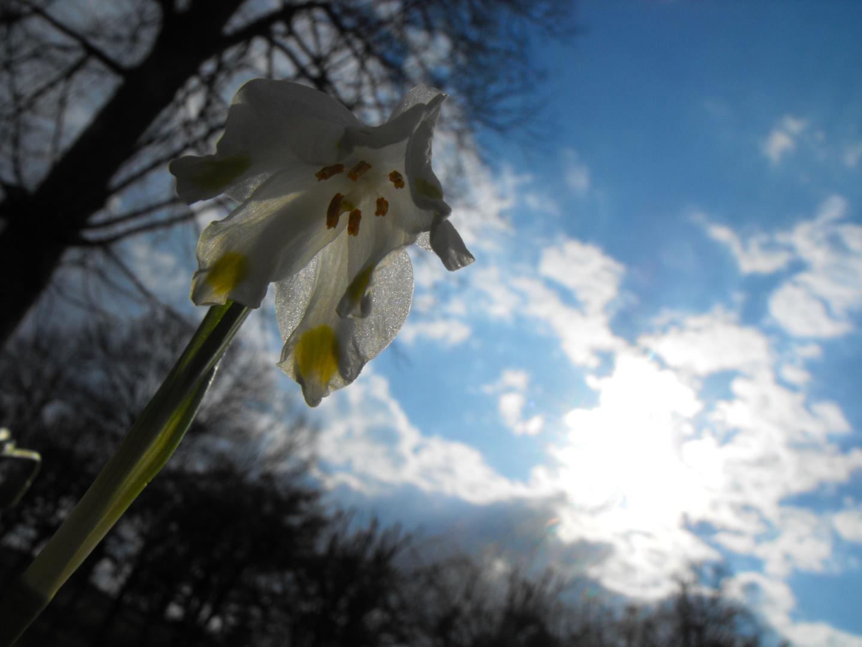 Frühlingskristall