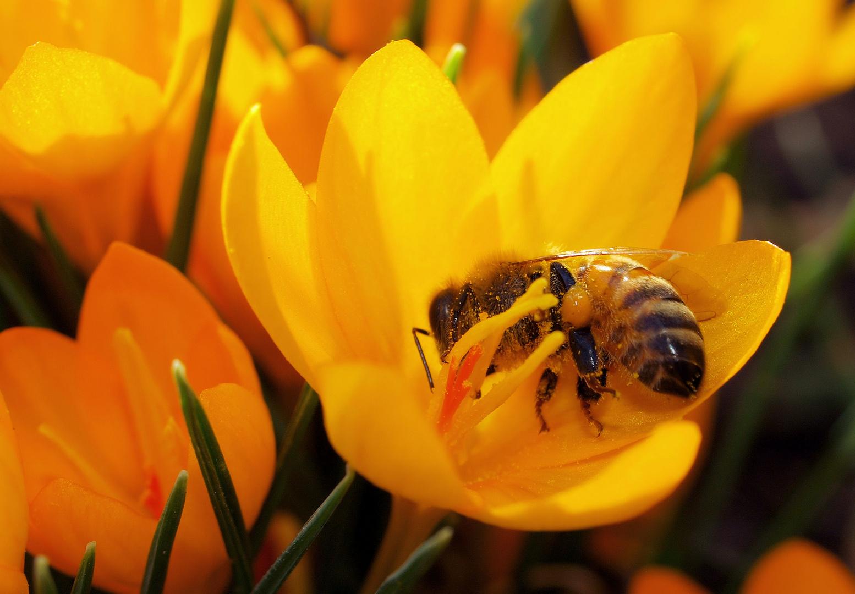 Frühlingskuss...