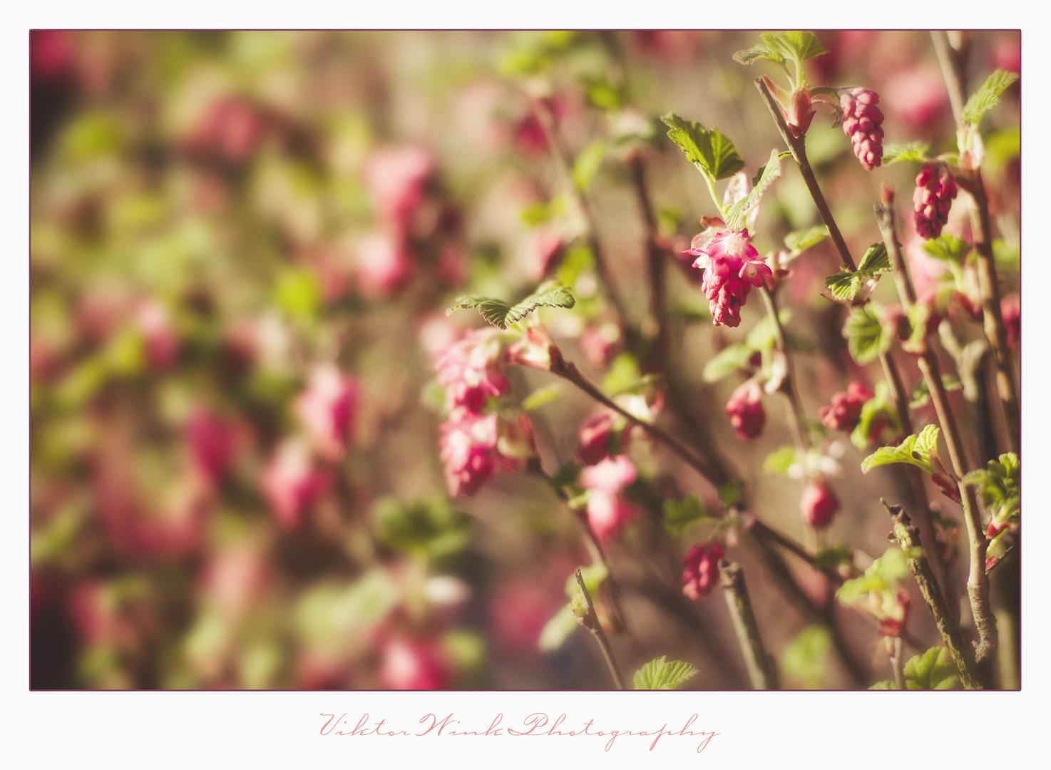Frühlingslachen