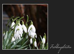 Frühlingsläuten