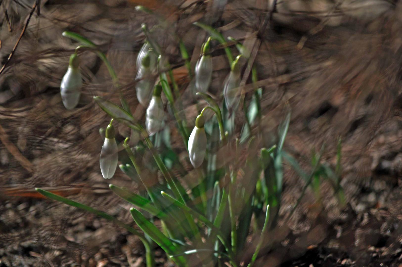 Frühlingslampen im Rausch