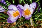 Frühlingslicht 2