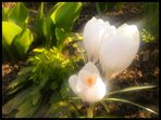 Frühlingslicht