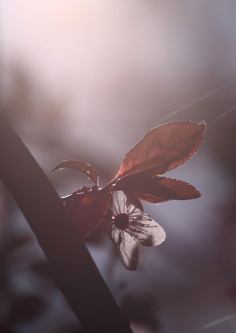 Frühlingslicht I
