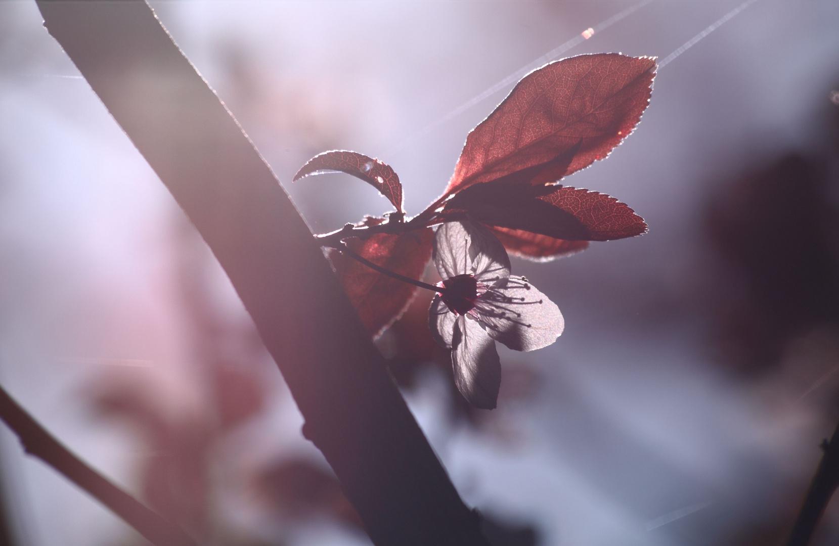 Frühlingslicht II