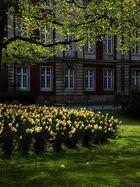 Frühlingslichter