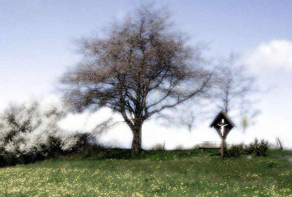 Frühlingsluft