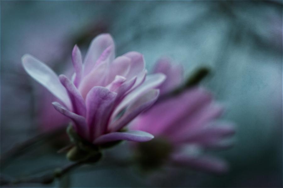 Frühlingsmelancholie