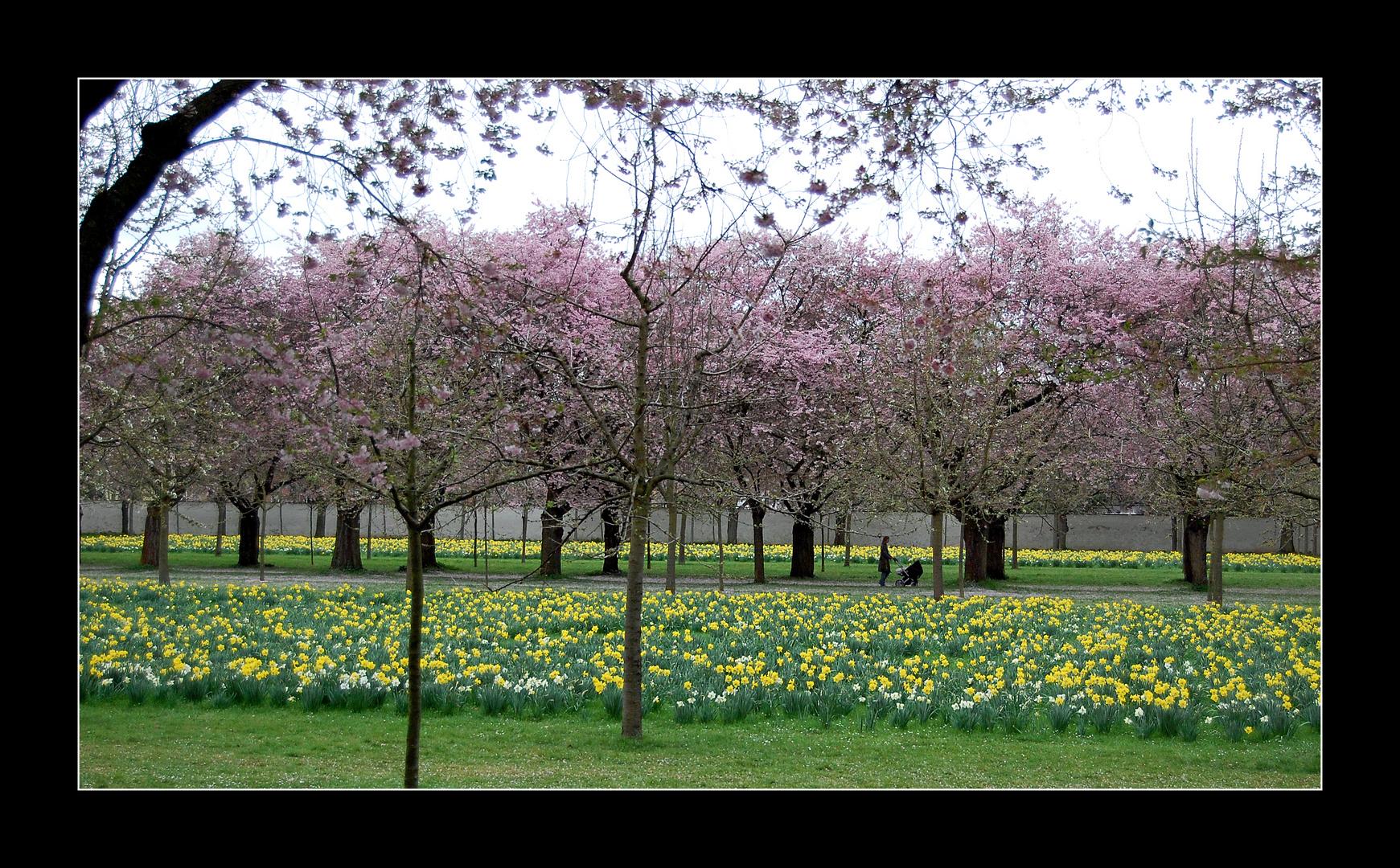 Frühlingsmorgen im Schlosspark - Nr. 1