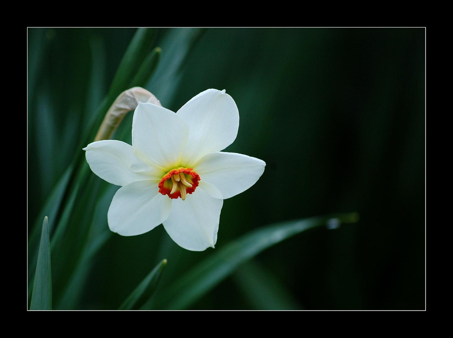 Frühlingsmorgen im Schlosspark - Nr. 2