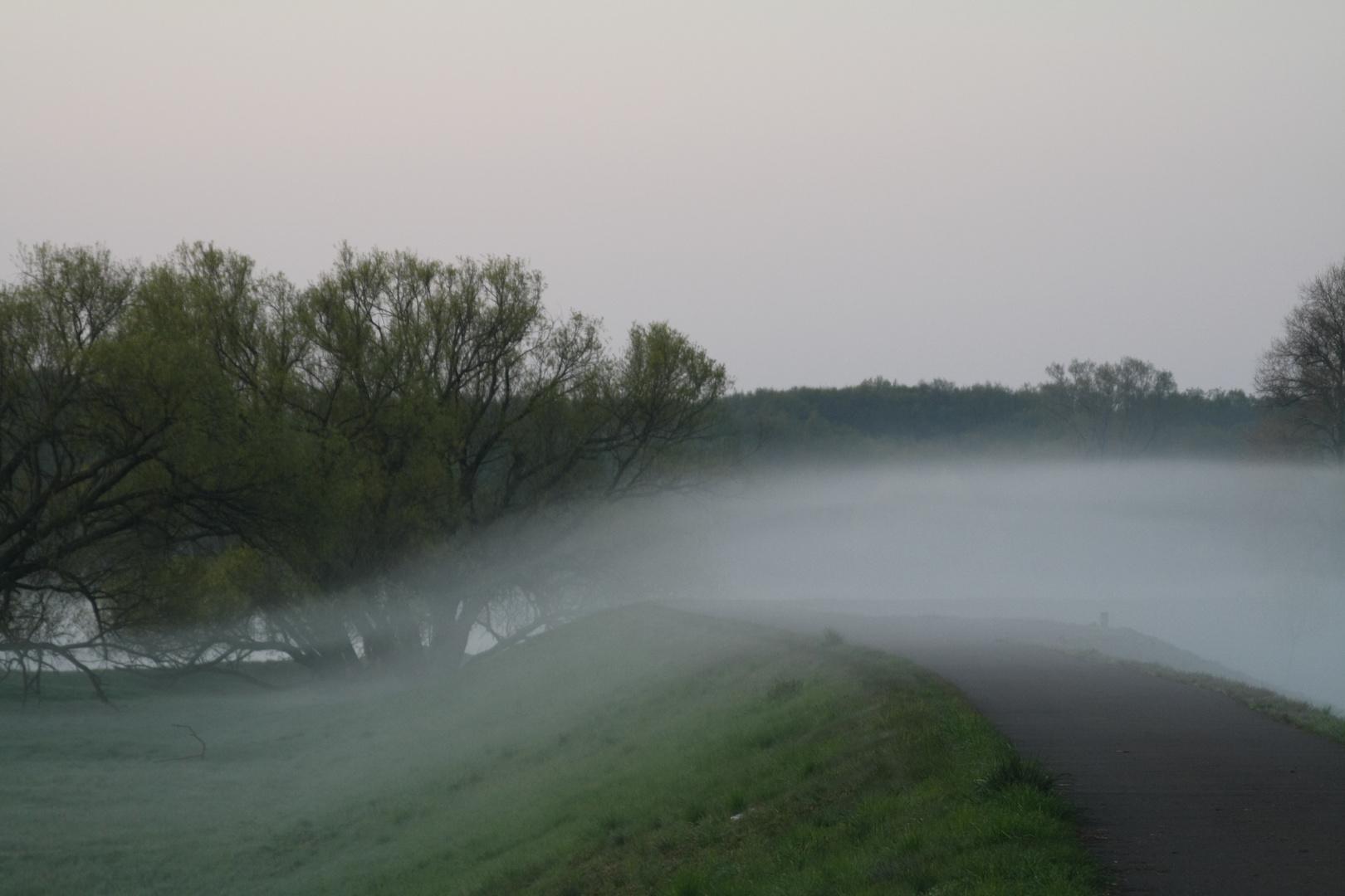 Frühlingsnebel am Oderdeich