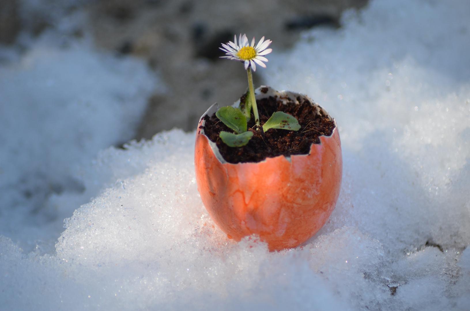 FrühlingsOsterEi..