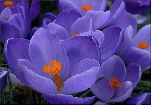 Frühlingsouverture