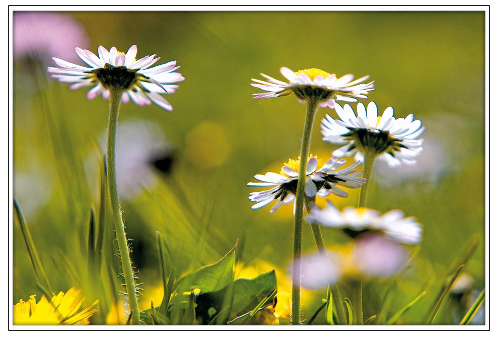 Frühlingspalette