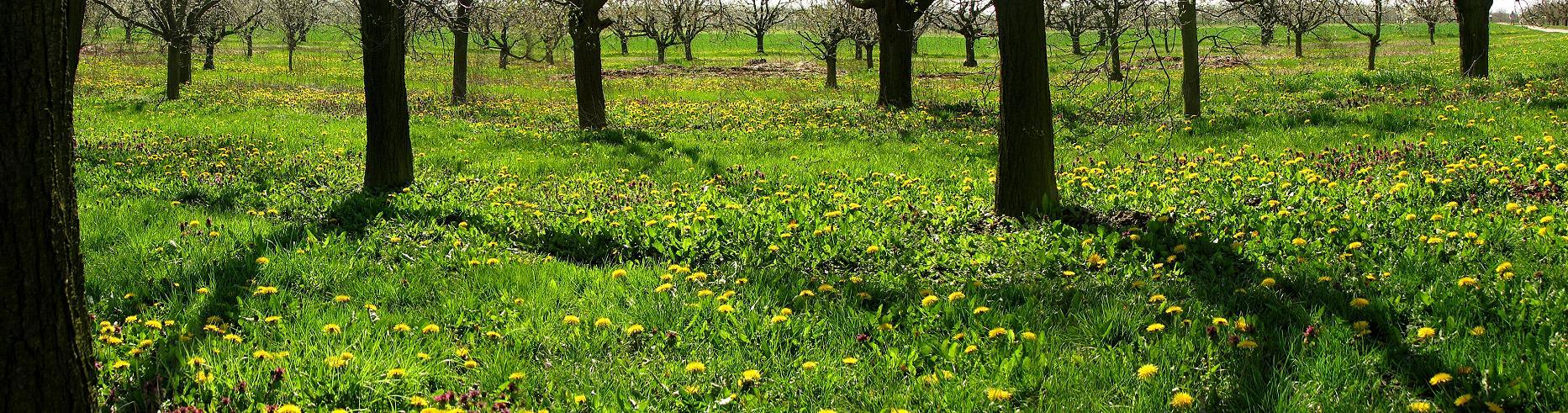 Frühlingspanorama
