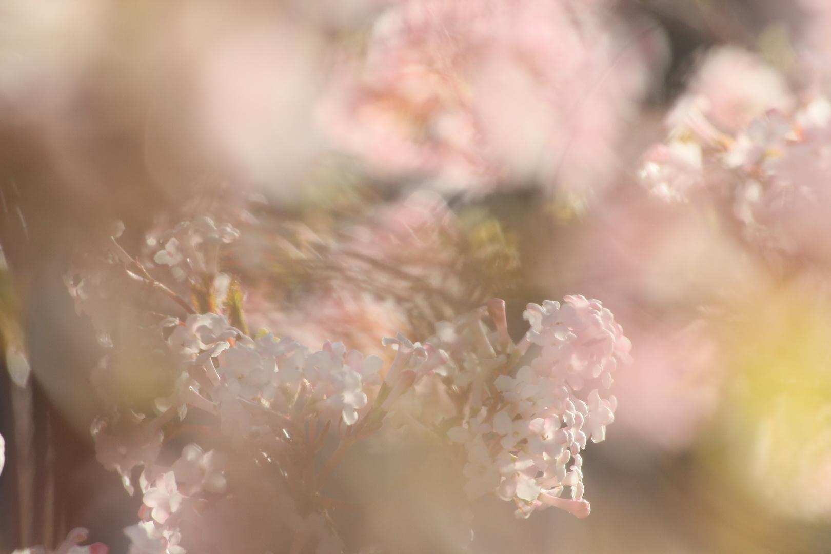 Frühlings:phantasmagorie