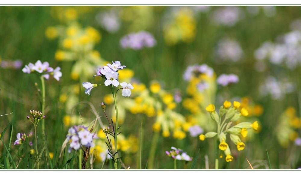 Frühlingspotourri