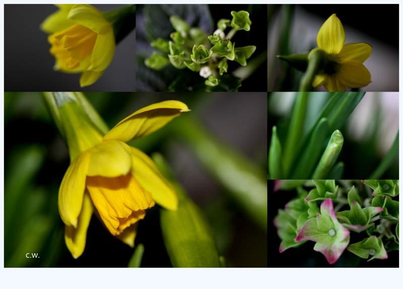 ...Frühlings.Pracht...