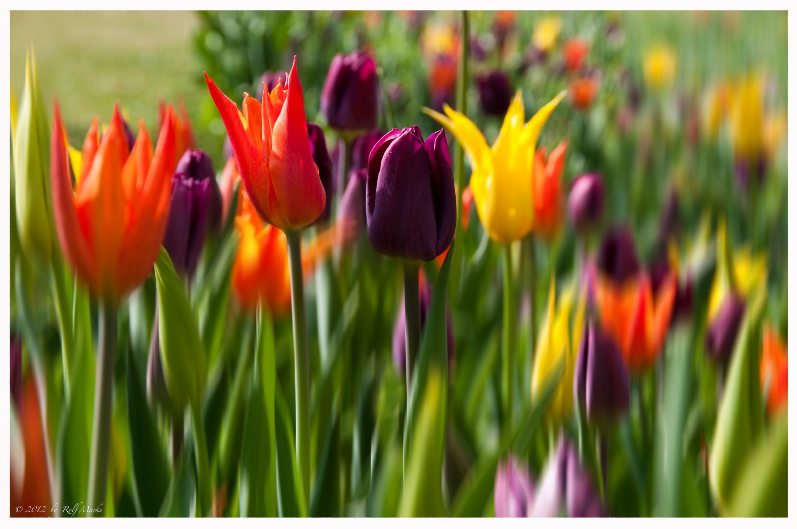 Frühlingspracht