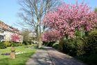FrühlingsPromenade.....