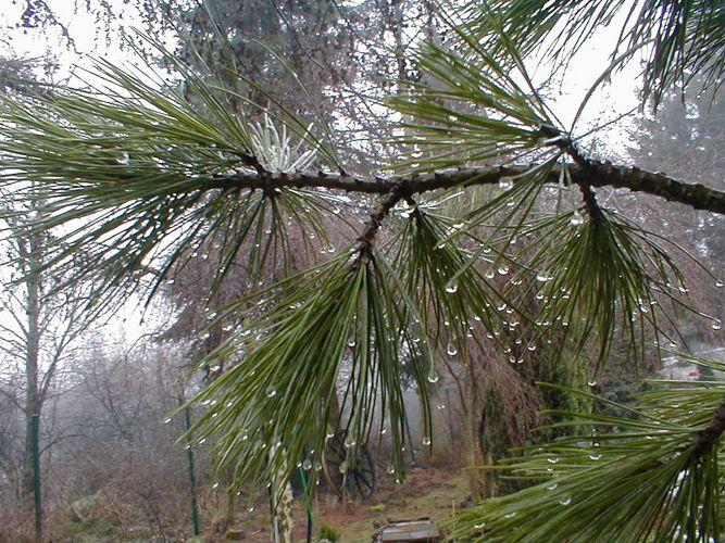 Frühlingsregen (1)